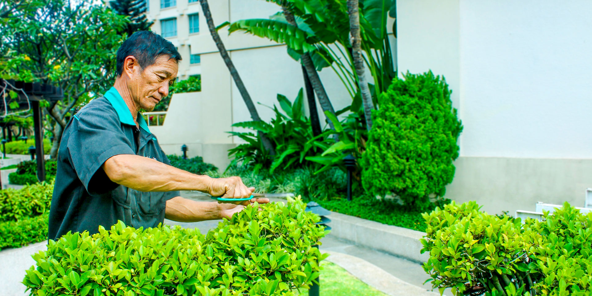 Bảo dưỡng và chăm sóc cây cảnh