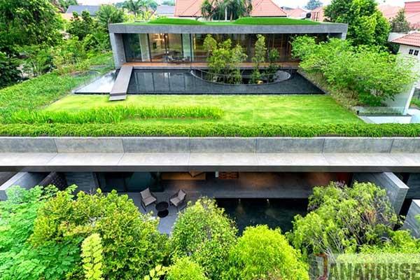 trồng cây trên mái