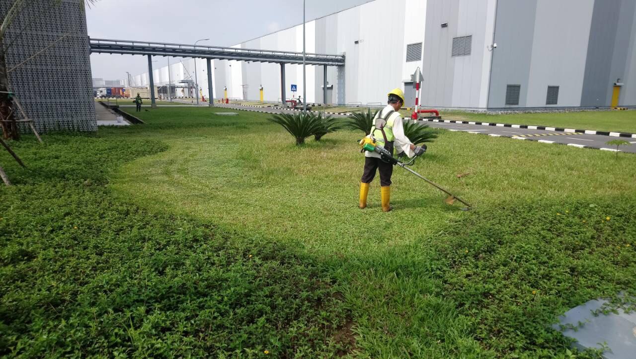 bảo dưỡng cảnh quan nhà máy tại Tập Đoàn First Solar Vietnam