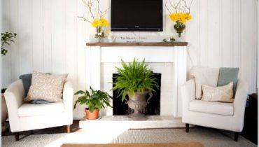 Cách trồng cây xanh trong nhà